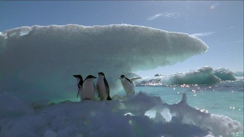The highest temperature recorded in Antarctica was detected in recent months.