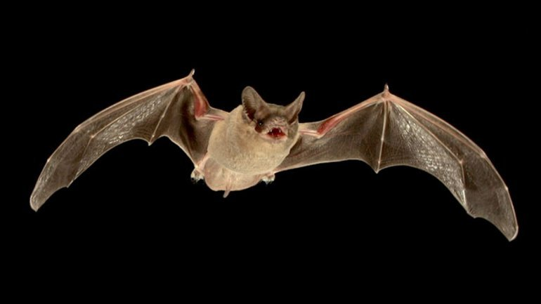 Bats are the origin of multiple viruses. Why?