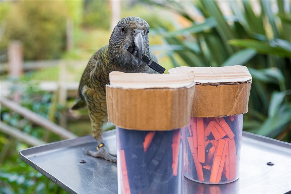 The parrot that uses statistics: we introduce kea.