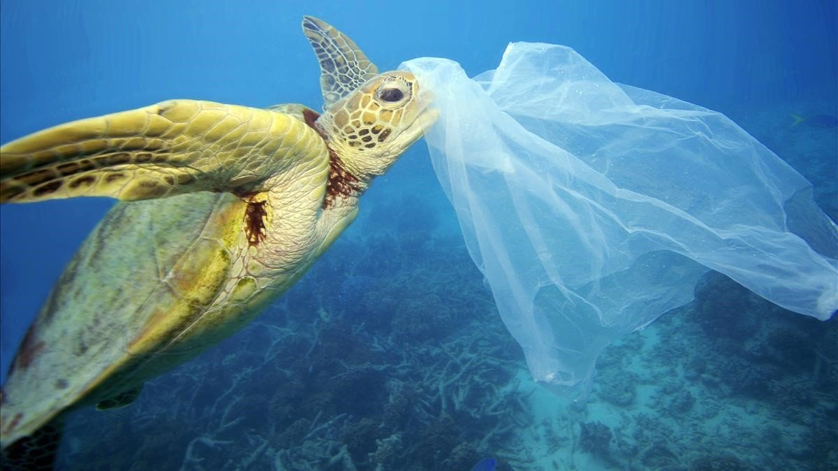 Sea turtles believe that plastic is food
