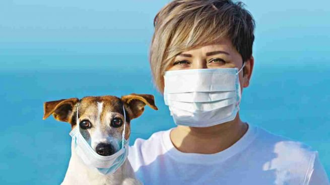 Pets and coronaviruses should not be listed as a concern for now.
