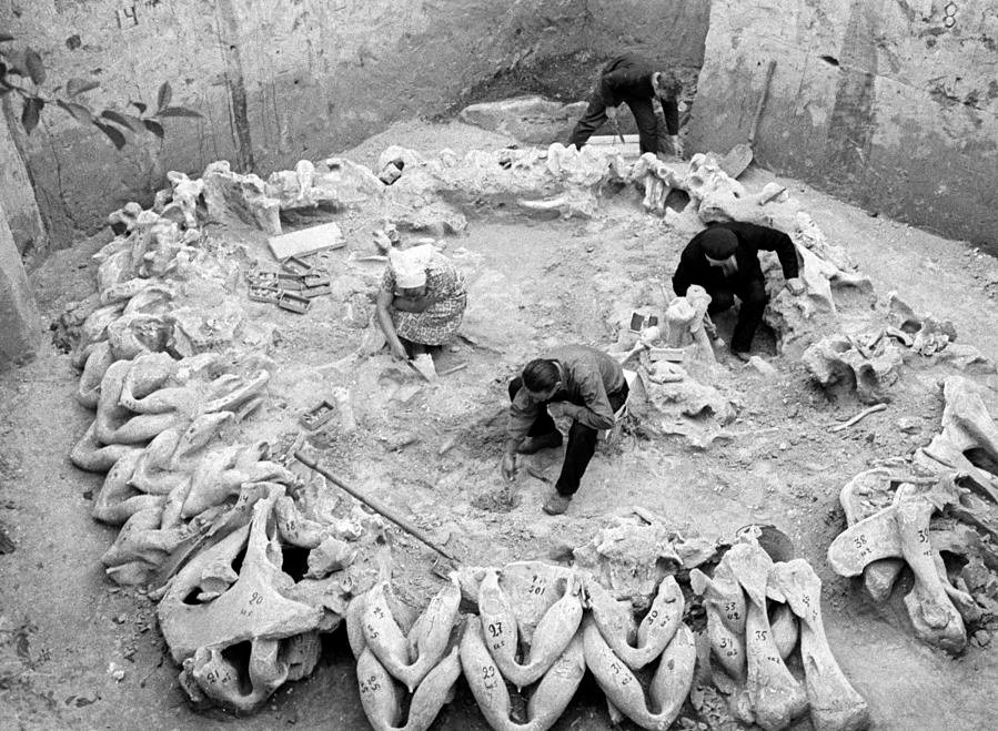 Archaeologists in full excavation.