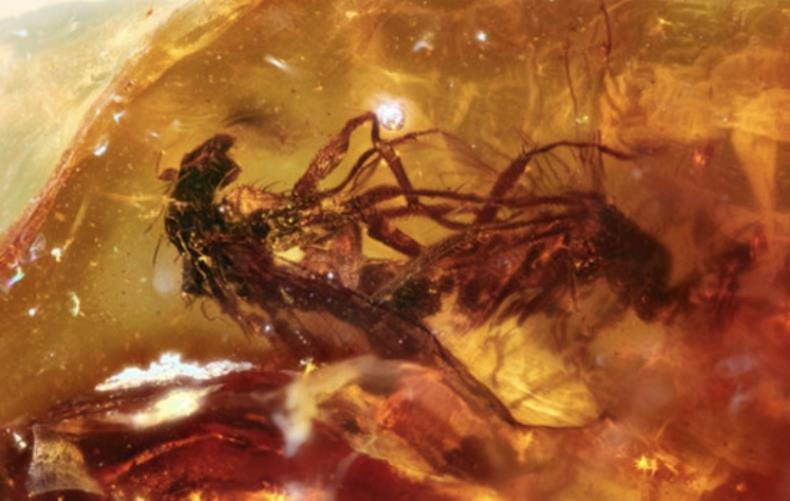 Insects caught in amber in full copulation