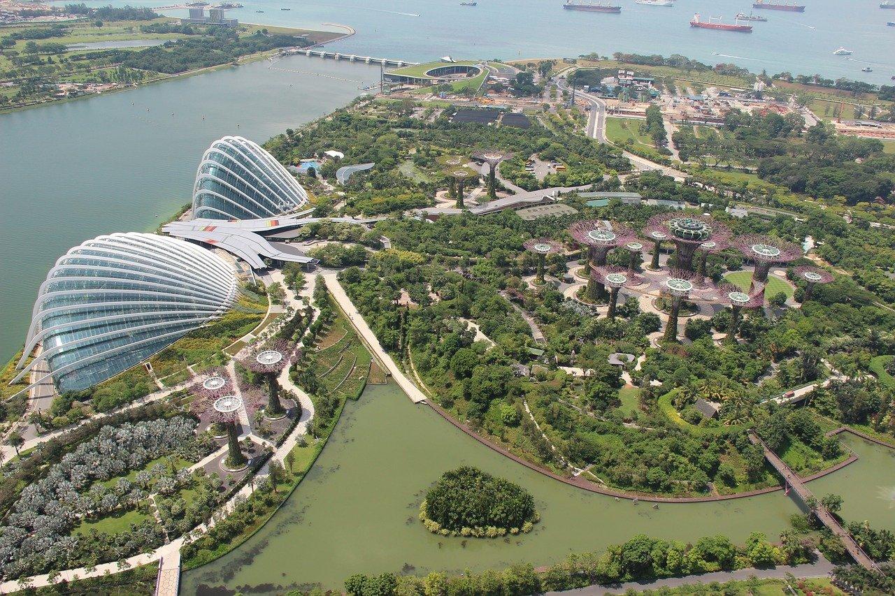 Urban trees in Singapore