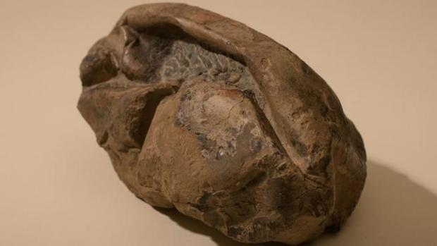The first fossil egg in the Antarctic