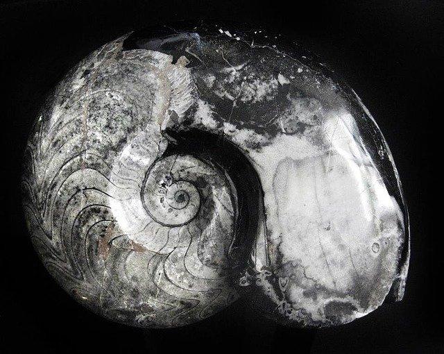 Fossil originating in the Devónico
