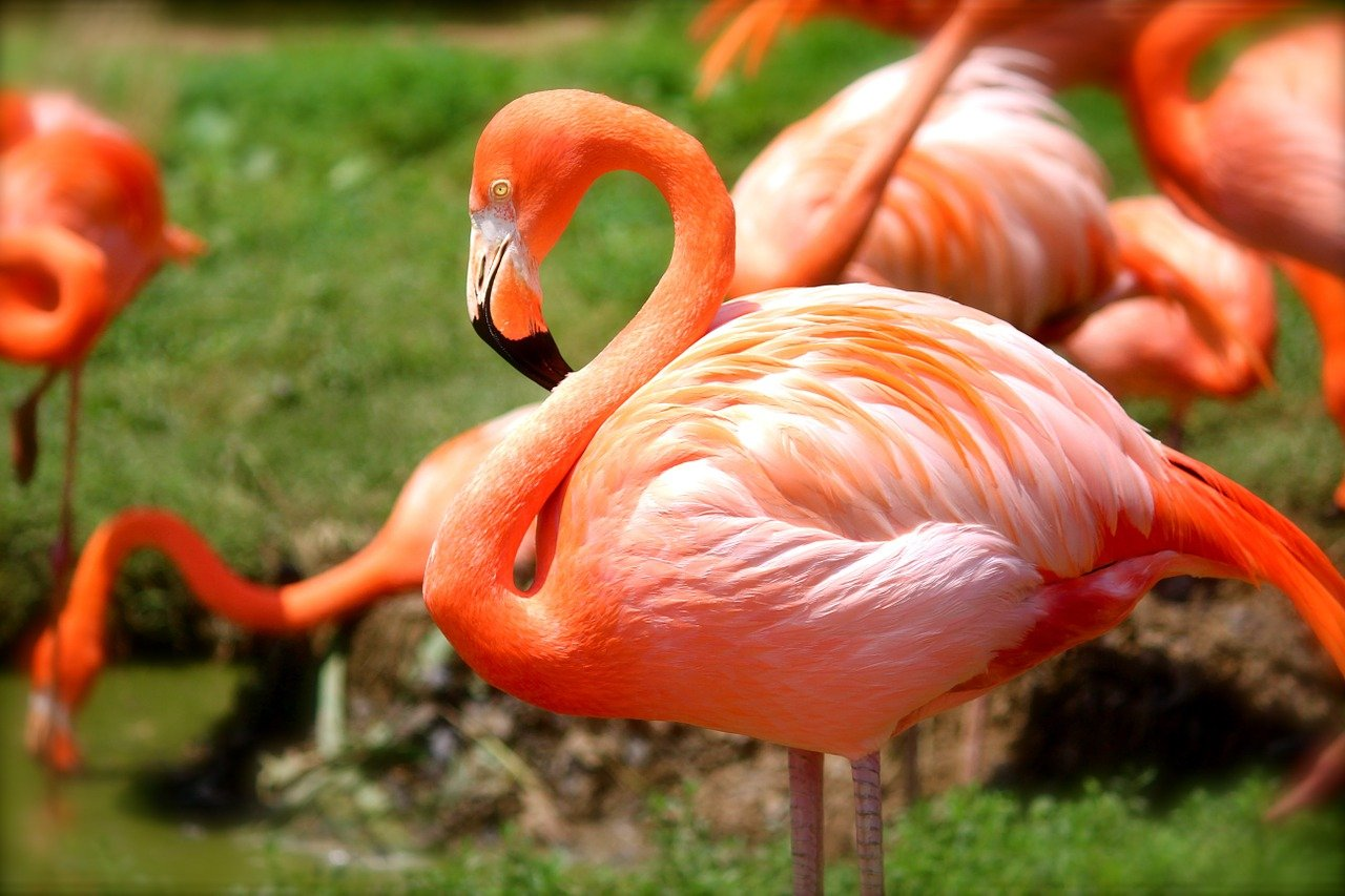 dark pink flamingos
