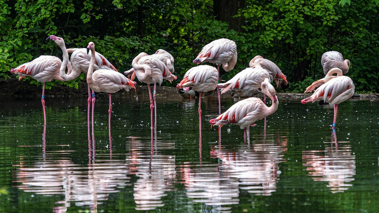 light flamingos