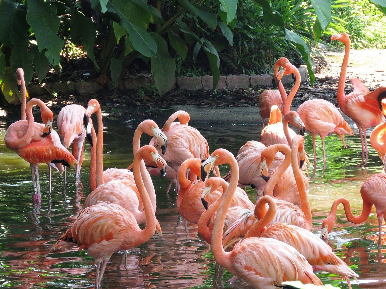 Dark pink flamingos hide a secret