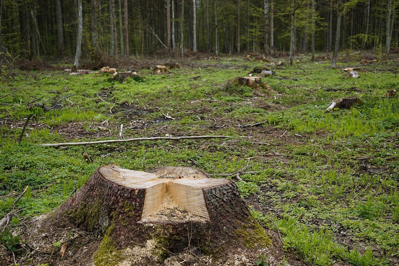 cut down native forest