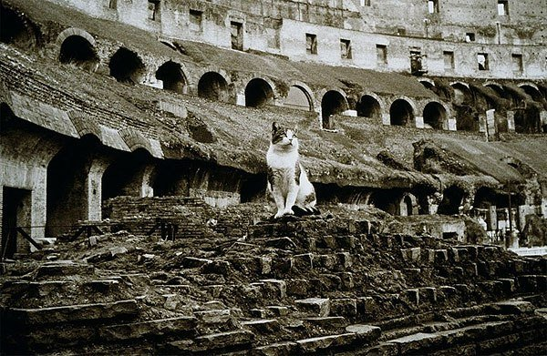 Apparently, the custom of domesticating cats spread throughout the Roman Empire.