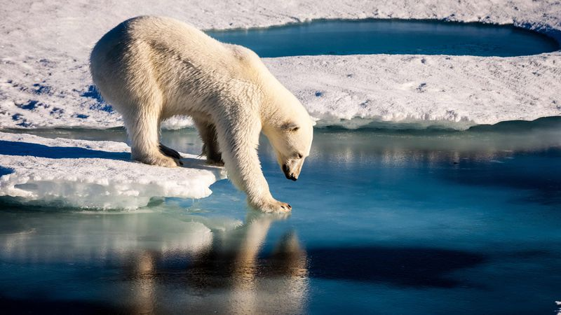 The decrease in ice could cause a number of environmental problems.