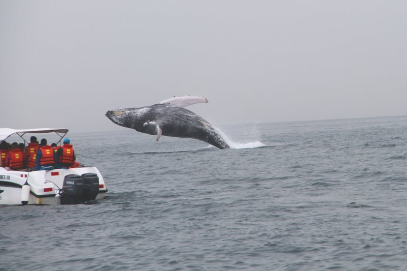 Whale watching does not take into account how noise affects whales.