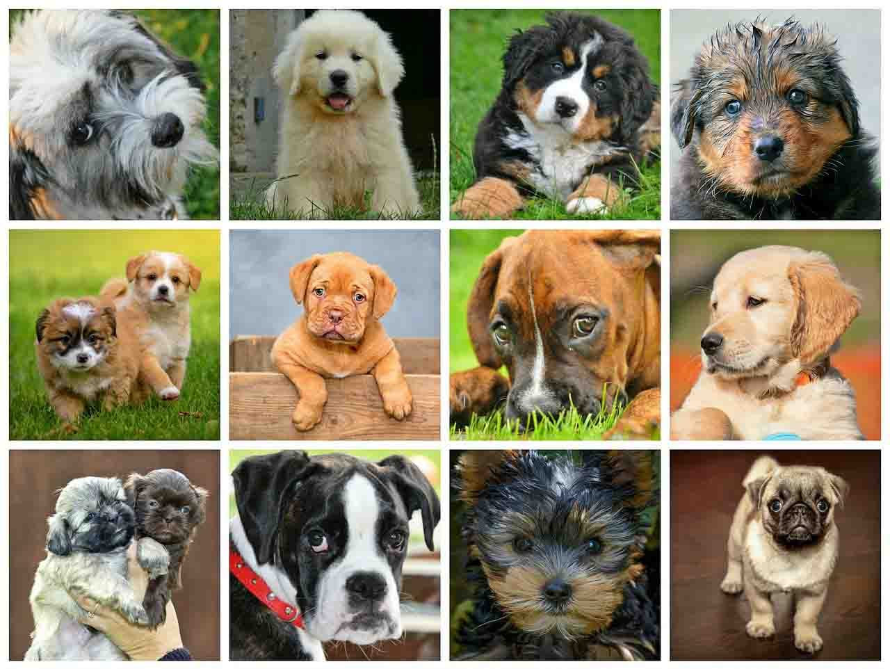 There are less popular dog breeds that can become extinct