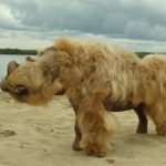 Woolly rhinos died out due to climate change and were not overwhelmed
