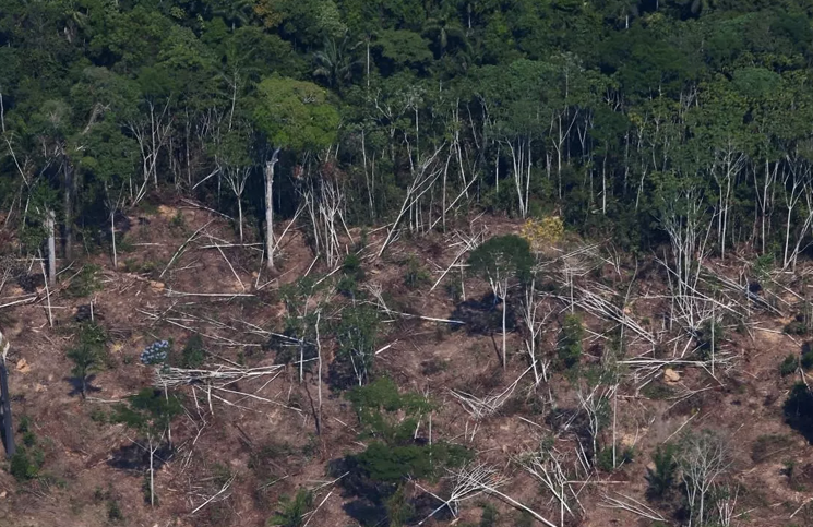 Millions of hectares of forest are lost every year.