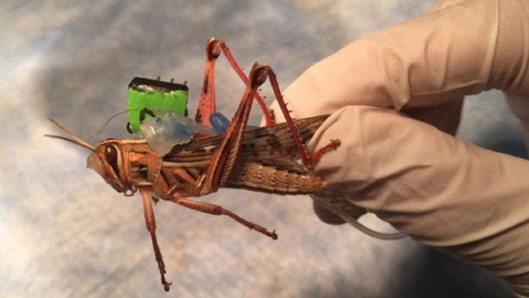 Lobsters could spot bombs