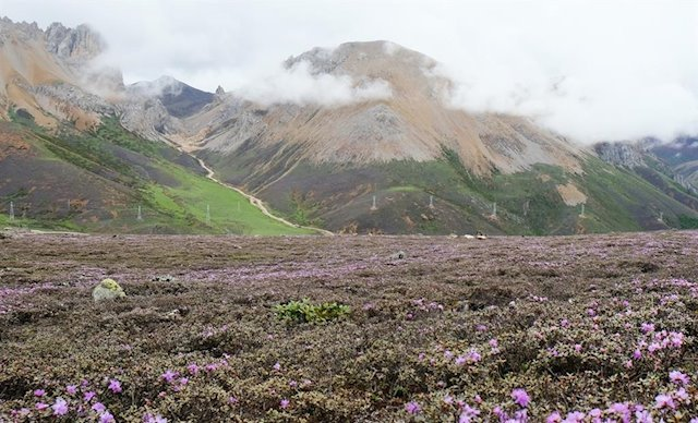 The mountains where the flowers were born.