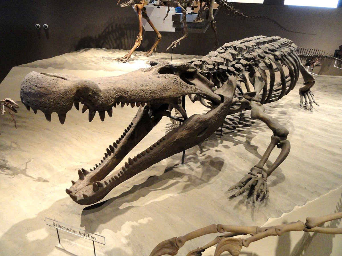 The Deinosuchus fossils continue to hold surprises in store for paleontologists.
