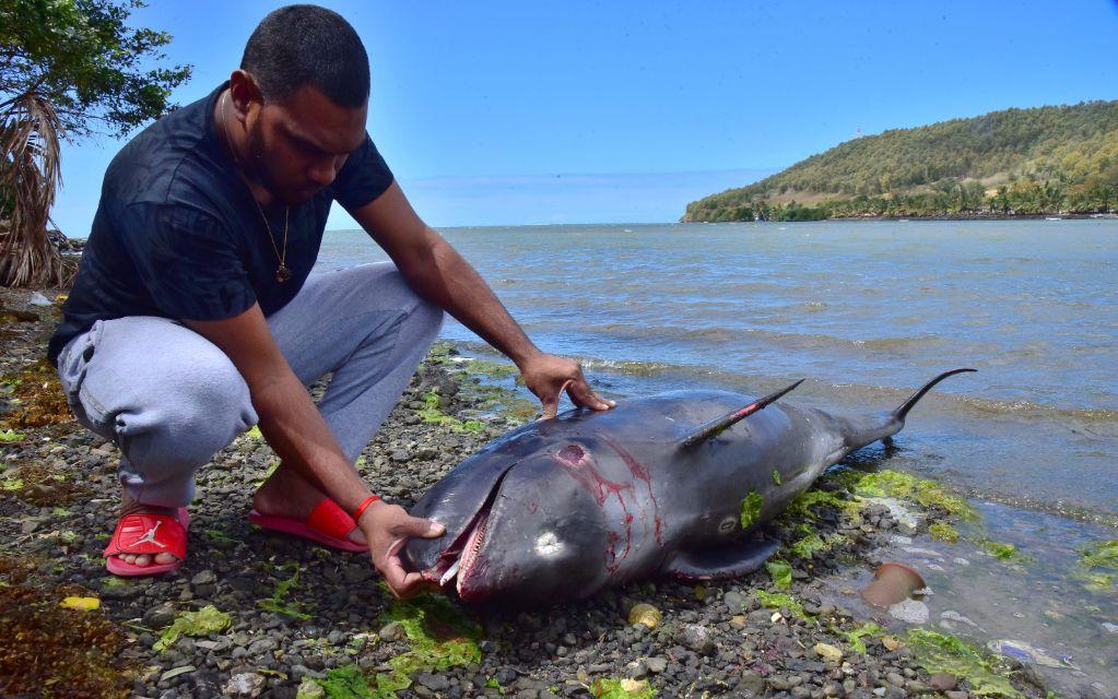 Mauritius - dolphins
