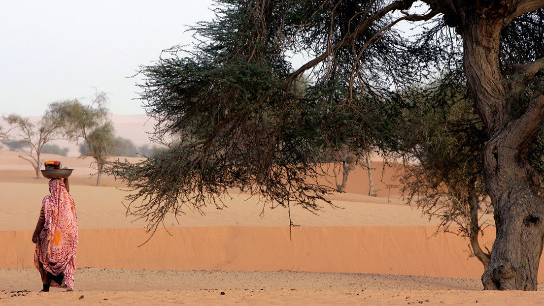 If you count the trees of the Sahara individually, you get the incredible number of 1.8 million.