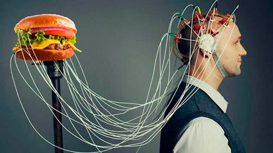 The brain remembers junk food and prefers it thanks to ancestral behavior