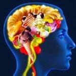 The brain remembers junk food