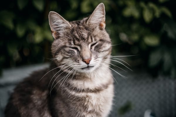 Communicating with cats through blinking helps us connect with them.