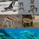 Stripes in animals: survival strategy