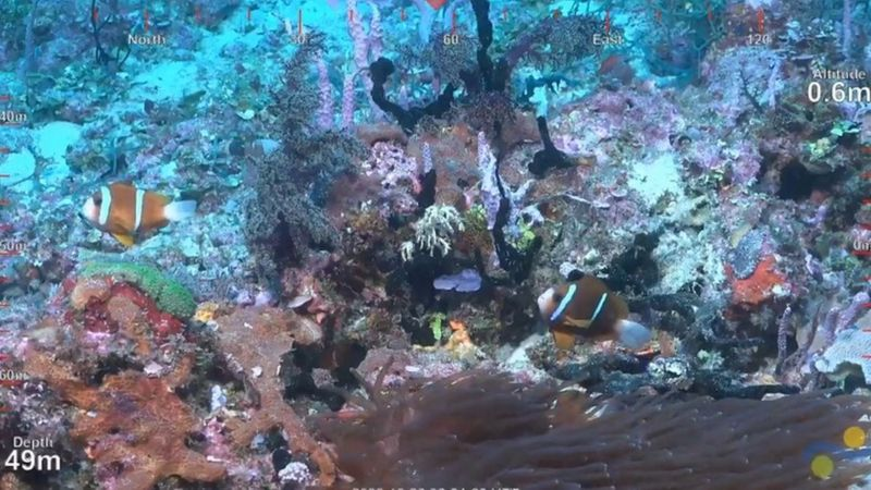 SuBastian, as the robot is called, filmed the underwater reef.