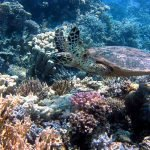 Giant reef discovered off the coast of Australia