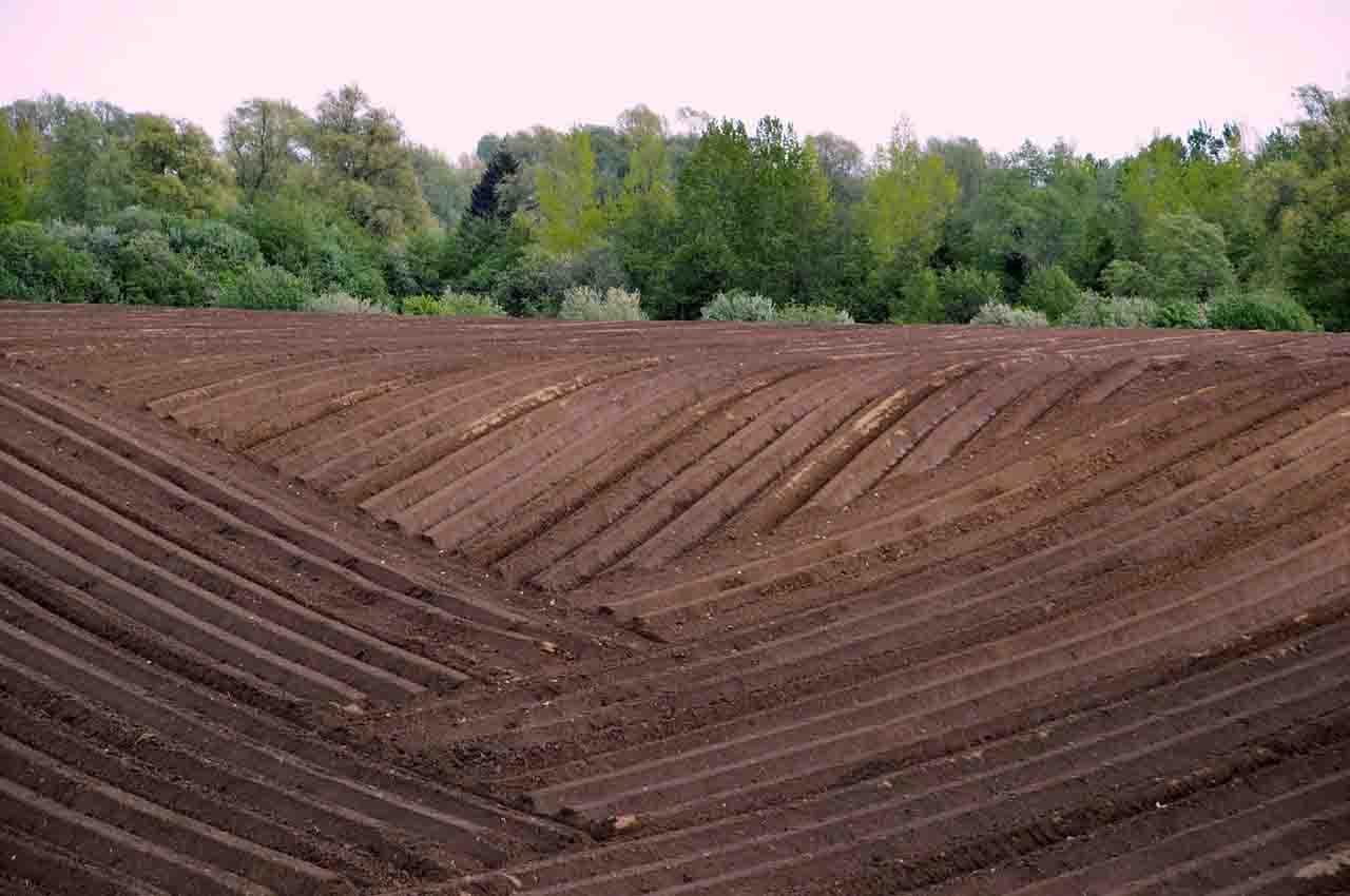 Deforestation to increase arable land