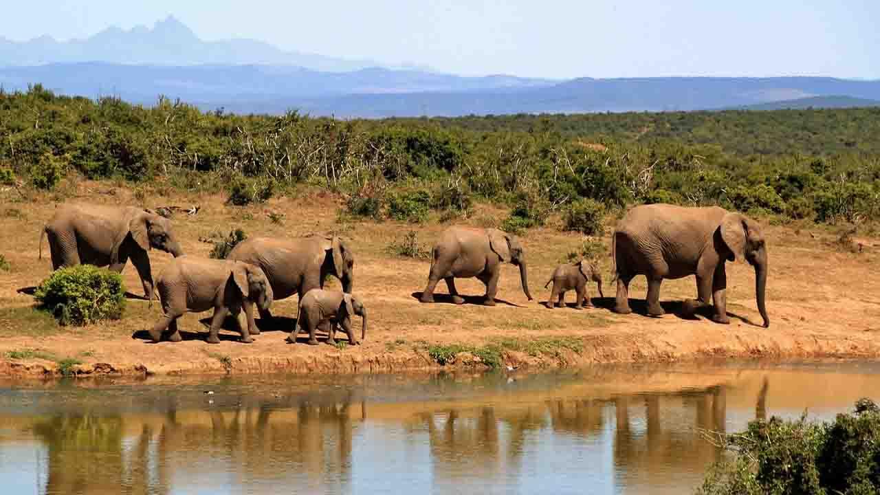 Algae killed elephants in Botswana