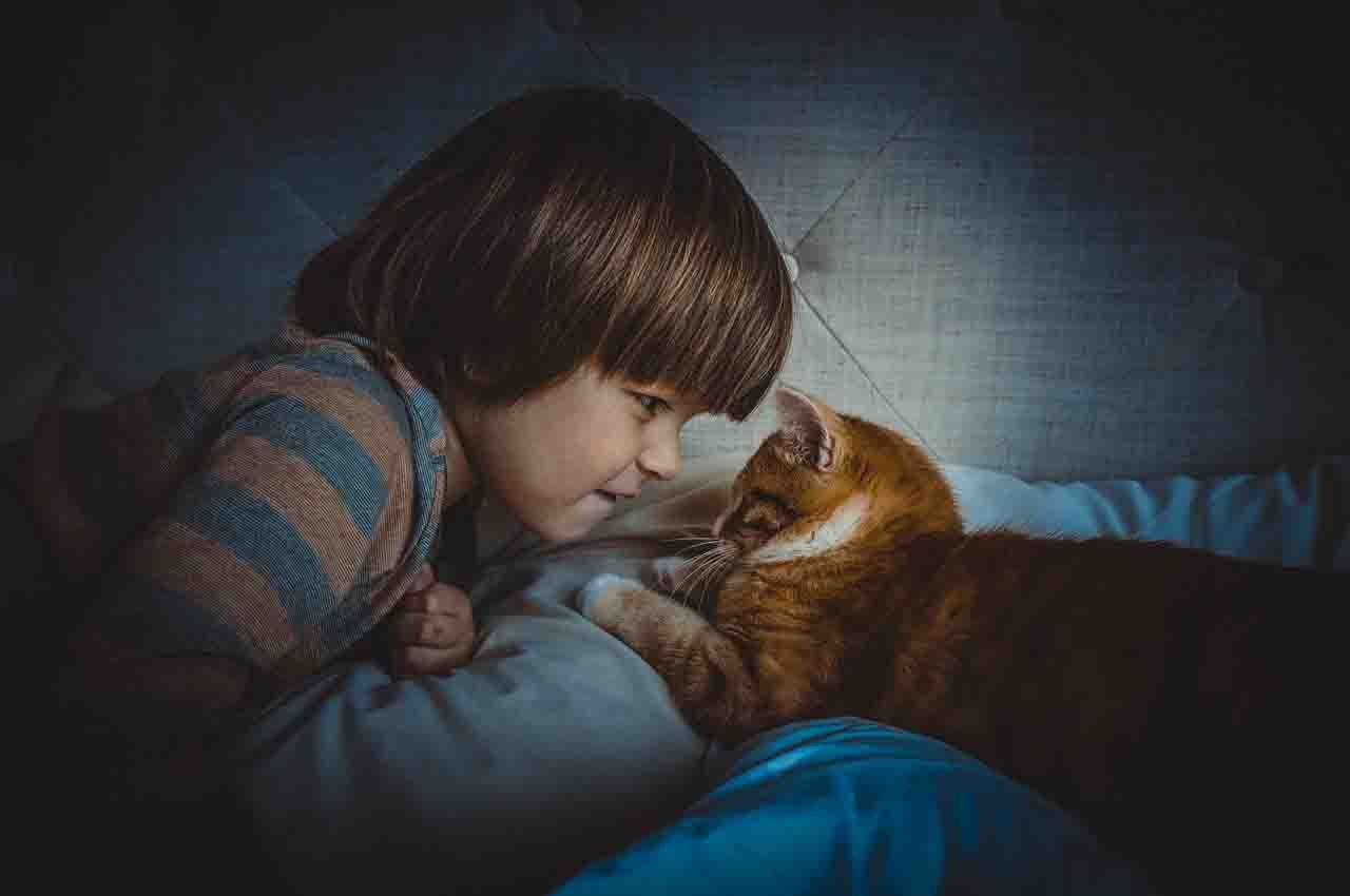 Children with ASD and cats