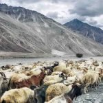 Himalayan snow melts from desert dust