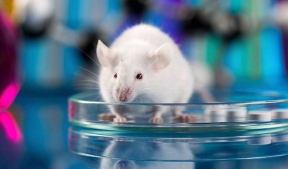 The experiment was carried out with tissues from laboratory mice.