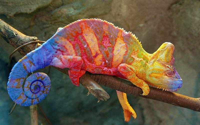 The material, which changes color like a chameleon, is inspired by these beautiful animals.