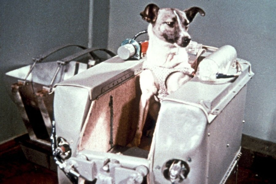 The dog Laika, who died in space, made a significant contribution to space programs.