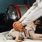 The dog that died in space: Laika