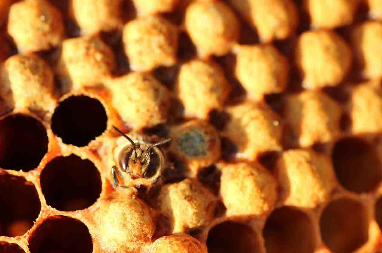 Honeycomb diseases