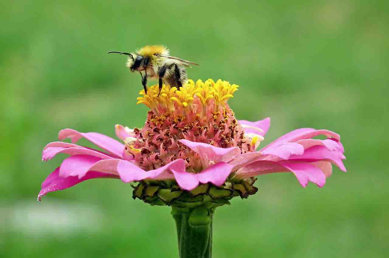 to pollinate artificial bees