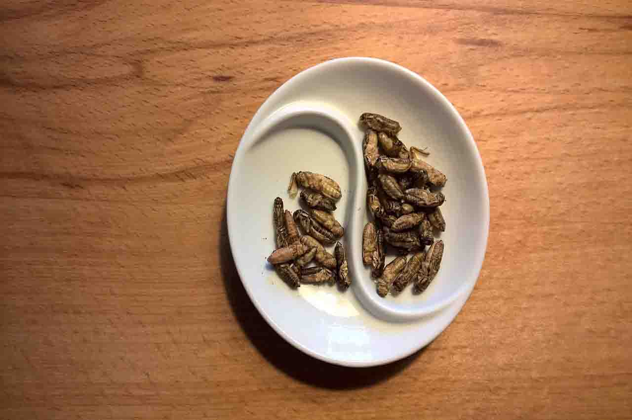 Eating insects is nutritious