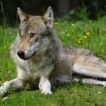Ancient canine DNA reveals valuable information