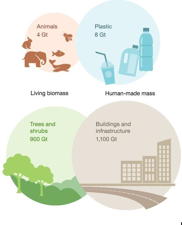 Comparison between anthropogenic mass and biomass for 2020.