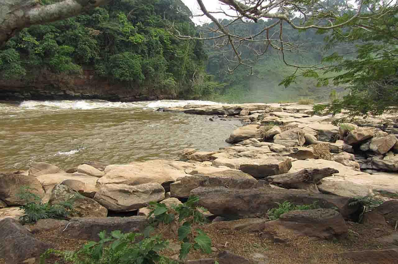 20 new species in the Zongo Valley