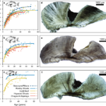 The oldest fish on coral reefs