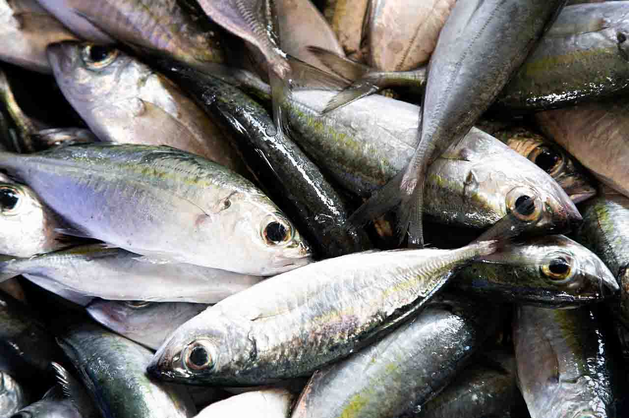 Cold water fish contain omega-3 fatty acids