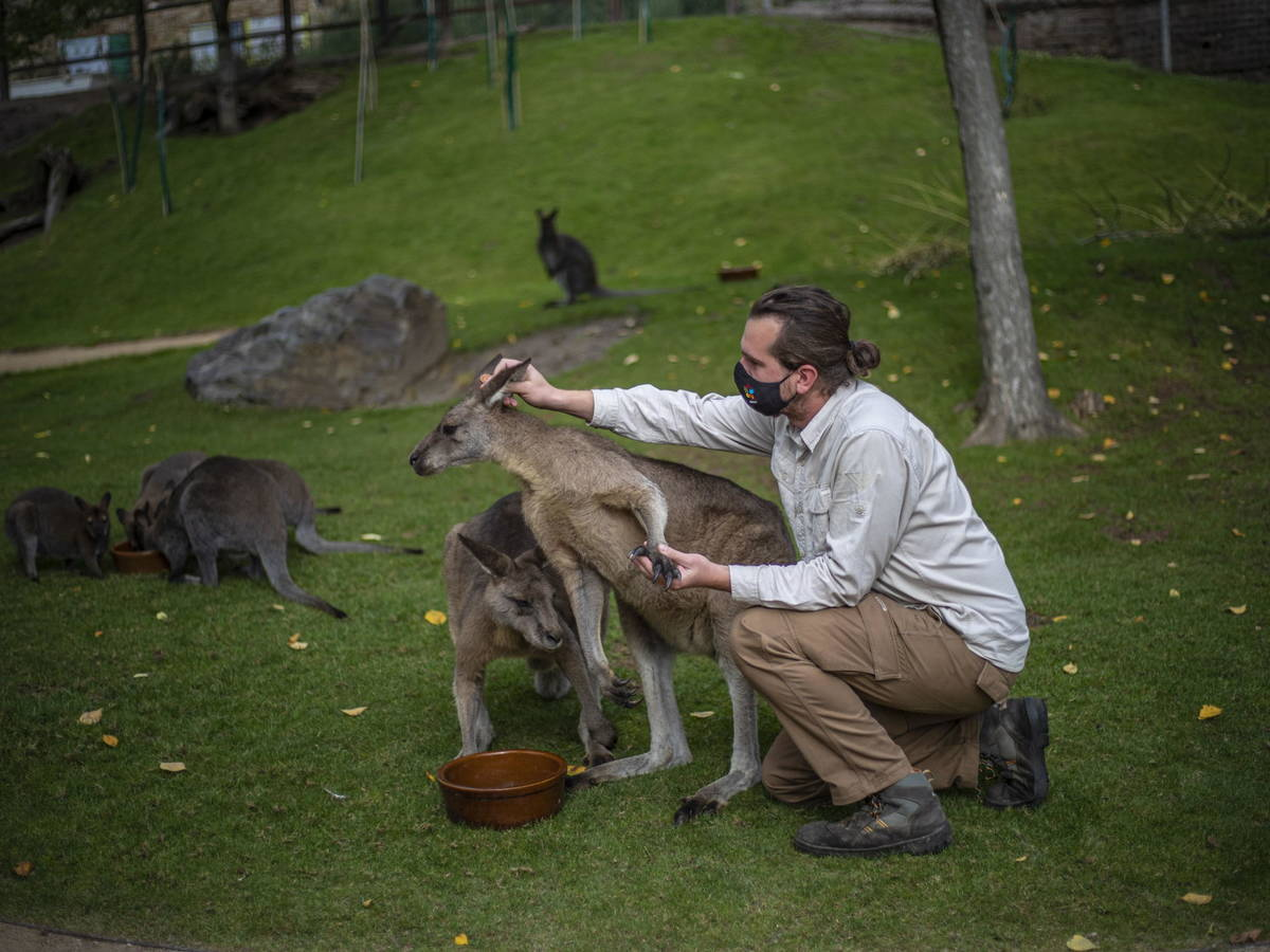 For many, kangaroos are very friendly animals.