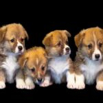 Choosing a puppy is the most appropriate
