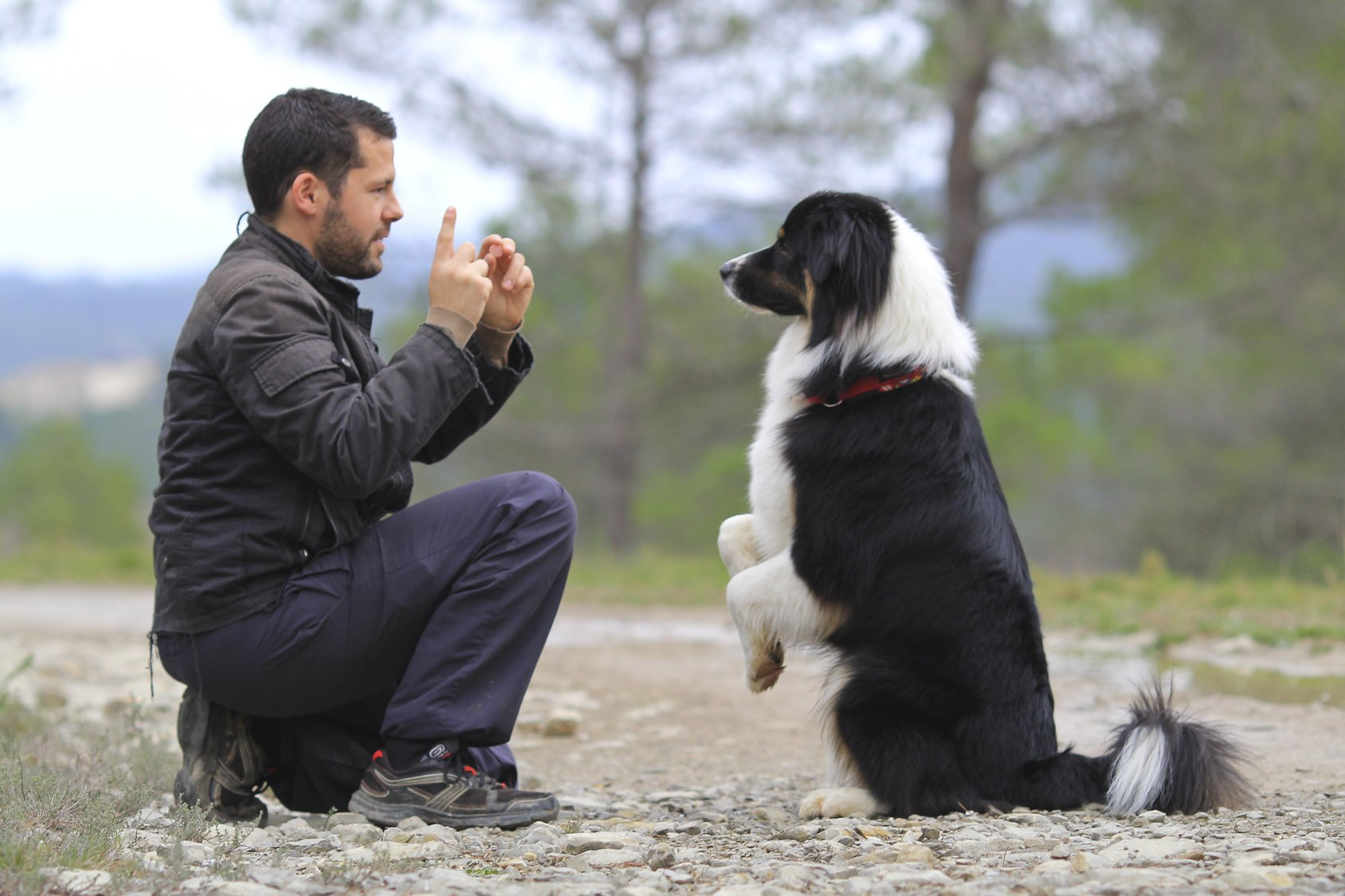 Many dogs show great ability to learn gestures and behaviors.